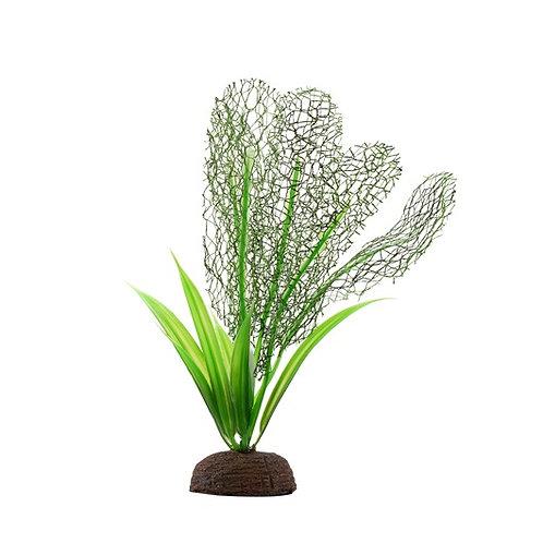 Plante-dentelle-Madagascar-sagittaire-Plant-Scapes-Aqualife-aquarium-poissons-Animal-Expert-St-Bruno