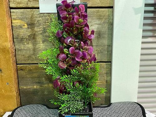 Plante-aquarium-verte-violette-hauteur-Animal-Expert-St-Bruno