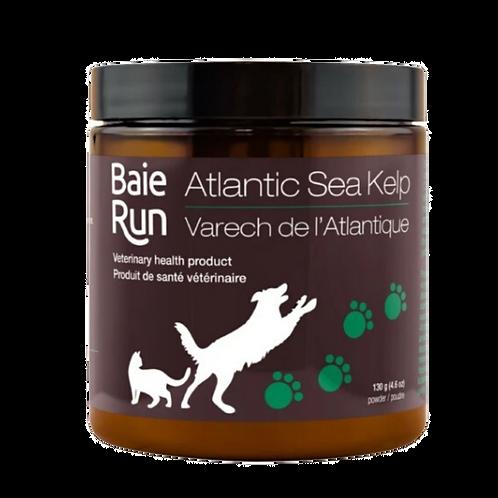 Poudre de varech Atlantique Baie Run pour chien et chat Animal Expert St-Bruno