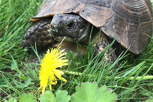 Tortoise Leaf & Flower Mix - 50g