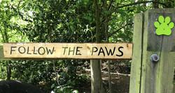 Follow the Paws