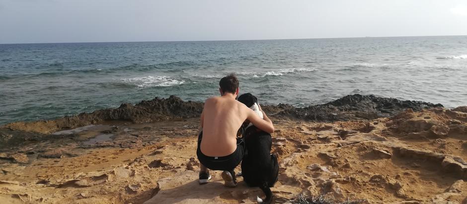 ¿Qué es y qué beneficios proporciona la Terapia Asistida con Animales (TAA)?
