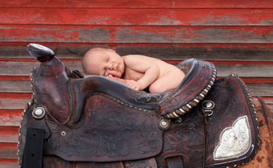 Horse Saddle Crop.jpg