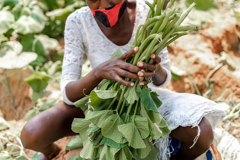 Couve Farm Luanda (8 of 24)-Edit-2.jpg
