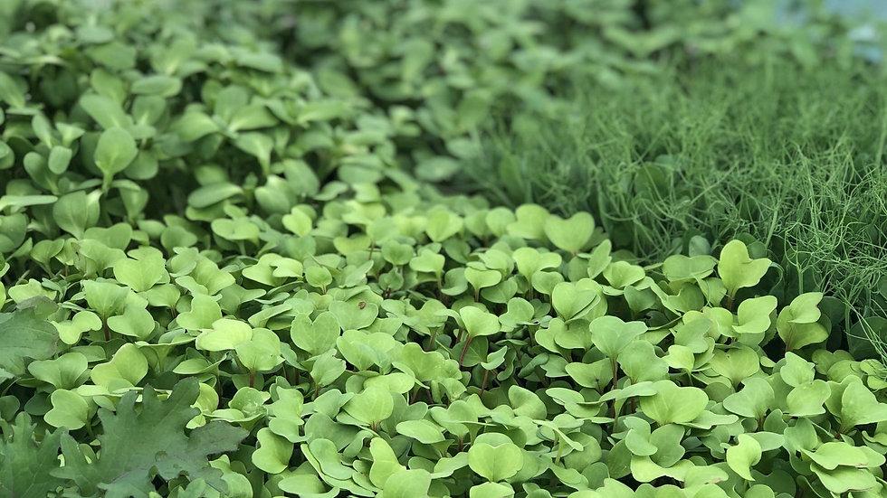 Microgreens - 50g compostable bag