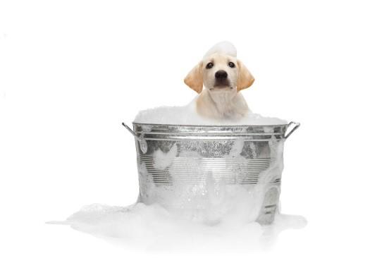 Banho para o Totó