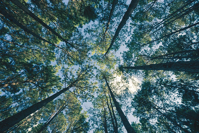 Skog og himmel