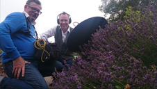 How to record bees!