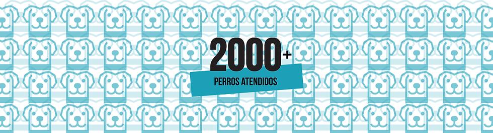 2000PerrosBanner.png