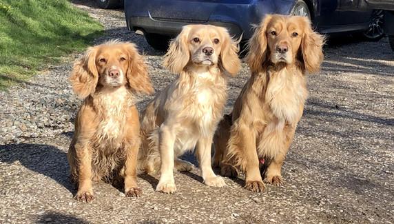 Ziggie, Finn & Luke aka mum, son & dad