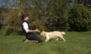 Pup training.jpg