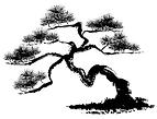 bonzai tree clipart.png