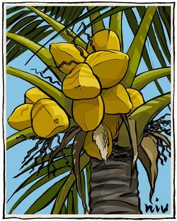 Niu (Coconut)