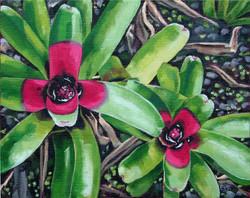 """Green Bromeliad"""