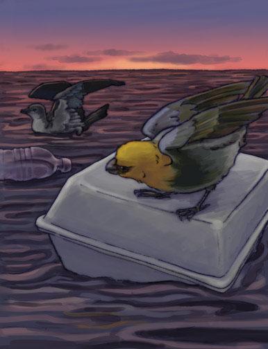 palila at sea