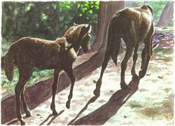 """Wild Horses, Waipio Valley"""