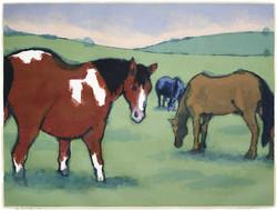 """the Far Field"" by Eve Furchgott"