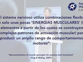 Sinergias musculares