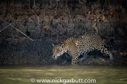 jaguar-008