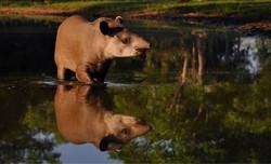 Photo by Pantanal JAguar Safaris