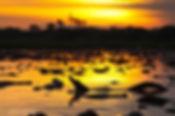 pantanal, safaris, jaguar, wildlife