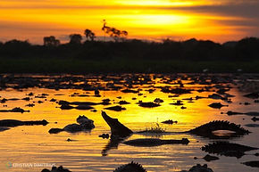 pantanal, safaris, jaguar, wildlife
