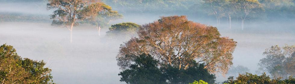forest-octavio campos-salles.jpg