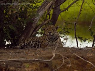 Pantanal Tours during the Green Season