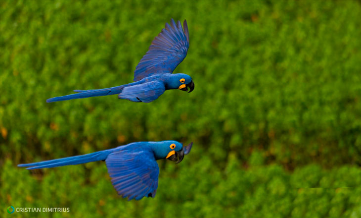 birdwatching_header