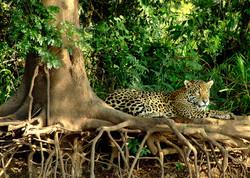 jaguar-006-Mario-Friedlander