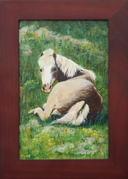 Resting Pony_Amanda Schuster