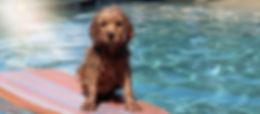 dogboard_edited.jpg