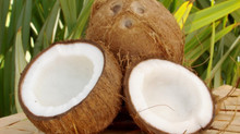 Coconut oil the healthiest oil on earth!