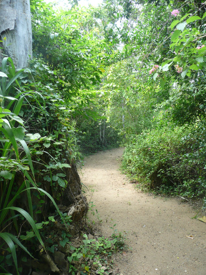 2008 pathway to the bungalows.