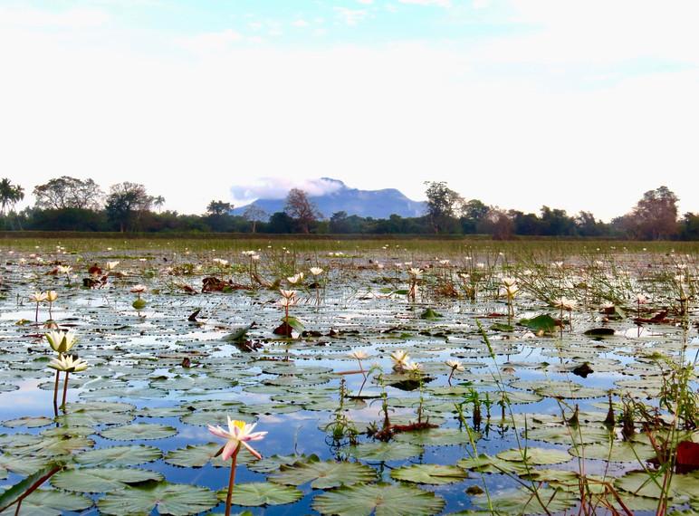 Ritigala mountain from the Galkadawala Lake.