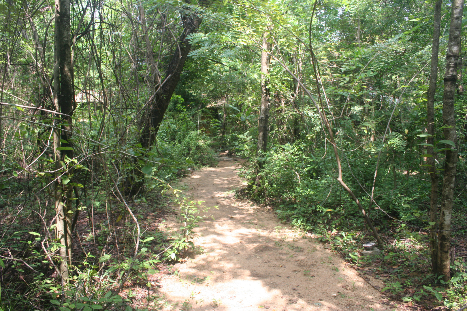 2012 pathway to the bungalows.