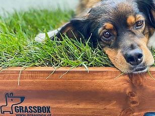 baño pasto real para perros