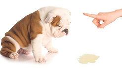 perro pipi.jpg