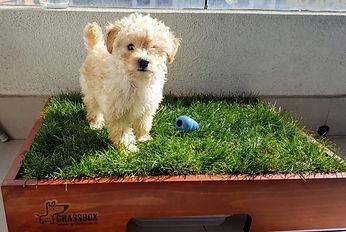 Caja pasto natural para perros