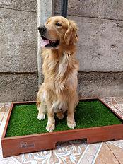 baño pasto sintetico perros