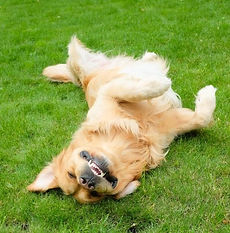 perro feliz.jpg