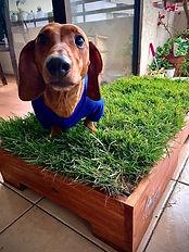 pasto natural para perros