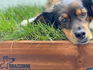 caja pasto para perros