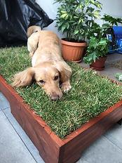 caja pasto natural perros