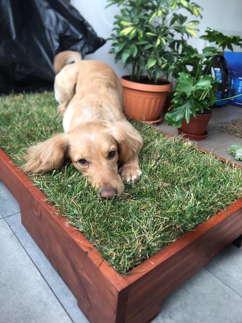 baño pasto natural perros