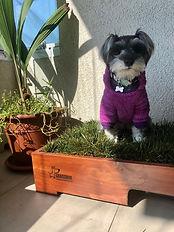Caja de pasto para perros