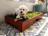 baño perro departamentos