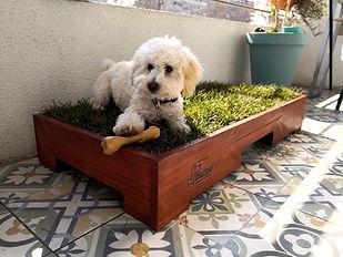 caja pipi para perros