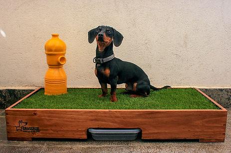 caja de pasto natural para perros
