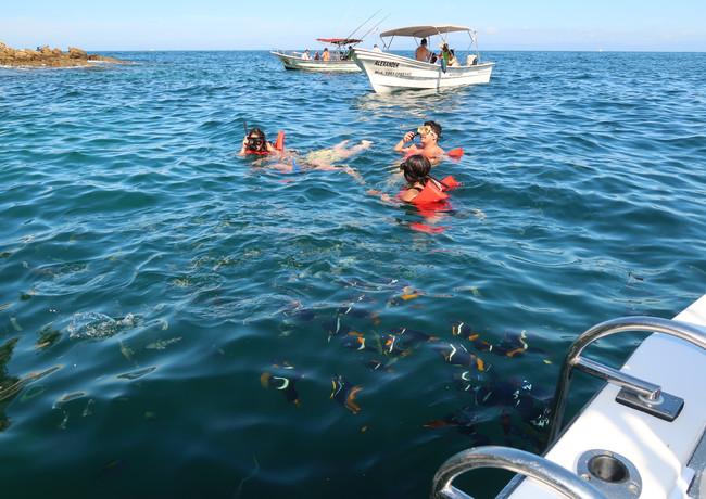 Snorkeling whit a lot Marine Lifeife